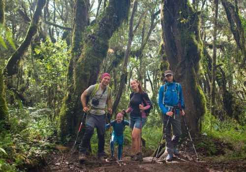 Путь через джунгли